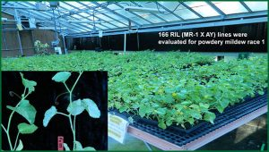 experimental plants in greenhouse