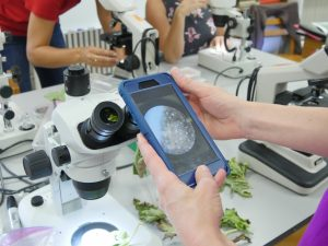 people using microscopes with diseased leaves